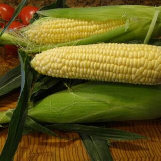 """""""Stalking"""" Fresno State Sweet Corn!"""