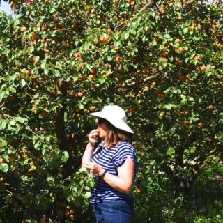 Apricots, apricots and more apricots!