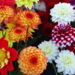 farmers_market_flowers