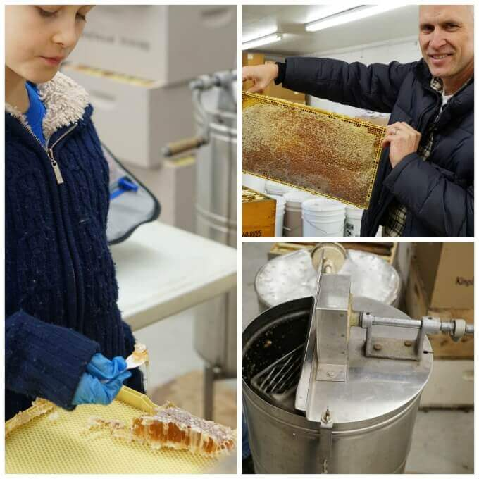 A collage of photos how to harvesting honey from the processing plant.