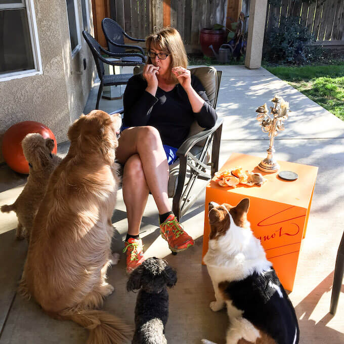 About me - Dogs begging for food from Deb